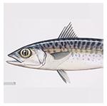foto-produk-ikan-13-150
