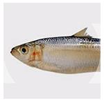 foto-produk-ikan-14-150