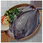foto-produk-ikan-24-150